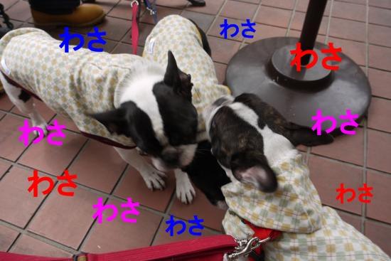 P1280150_convert_20110509101719.jpg