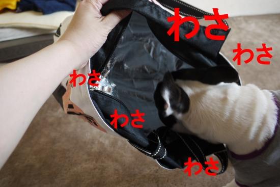 P1280567_convert_20110518170251.jpg