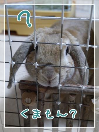 くまモンっちょ4