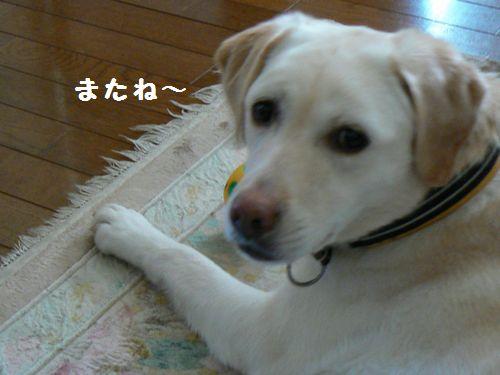 12_20130318210455.jpg