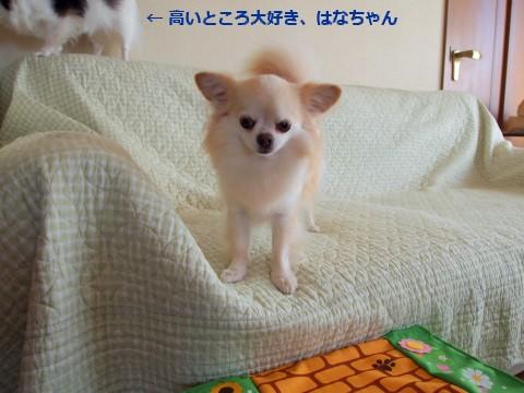 20110712_1.jpg