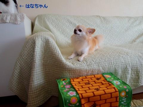20110712_3.jpg