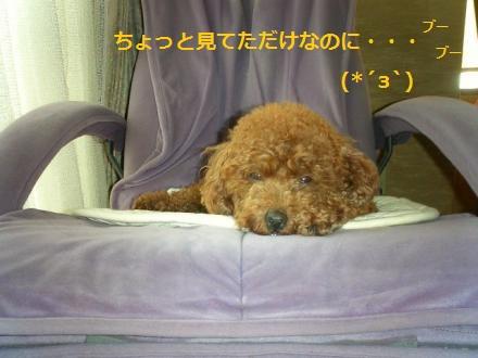 CIMG4082_convert_20141125205033.jpg