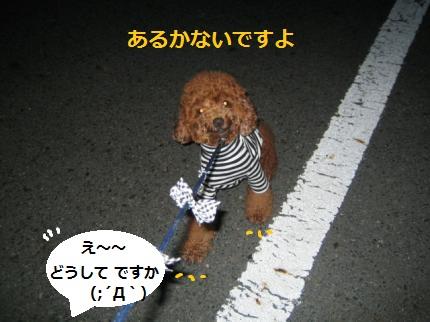 IMG_2701_convert_20141120211347.jpg