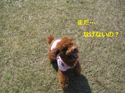 IMG_2870_convert_20141127124829.jpg