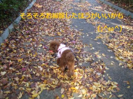 IMG_2891_convert_20141118195417.jpg