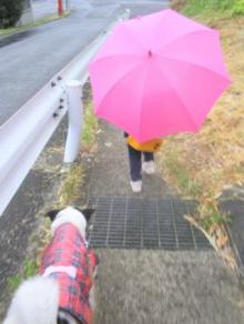 0519雨の日