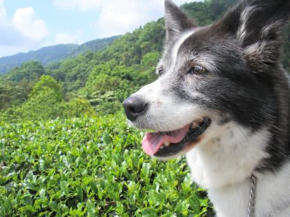 0521緑と牛柄犬-4-2