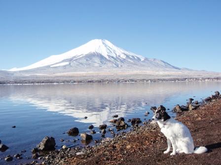 2008.12.15 ルナと逆さ富士