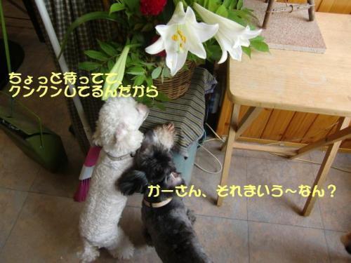 CIMG1083.jpg