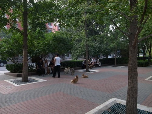 th_1109beijing_pet01.jpg