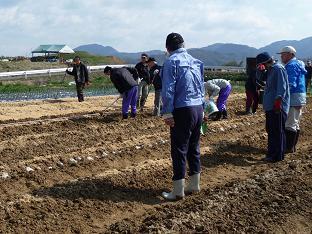 P1030117菜園芋植え