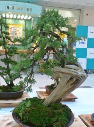 bonsai61.jpg