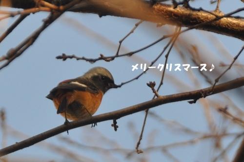 018_20121224010803.jpg