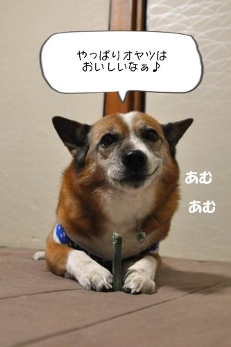 030_20100326002127.jpg