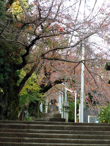 伊豆山神社800段の階段