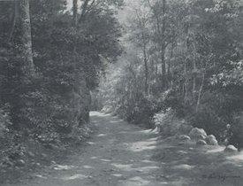 1984林道(6F)1