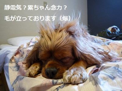 2011_1204_093833-P1120537.jpg
