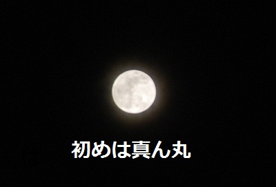 2011_1210_201328-DSC_0859.jpg