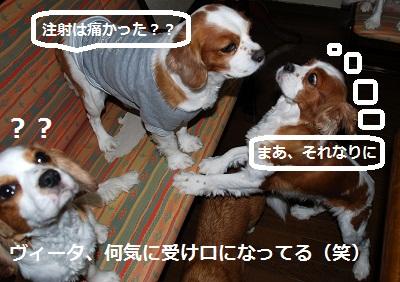 2011_1210_220304-DSC_0901.jpg