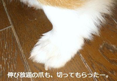 2011_1218_101231-P1120650.jpg