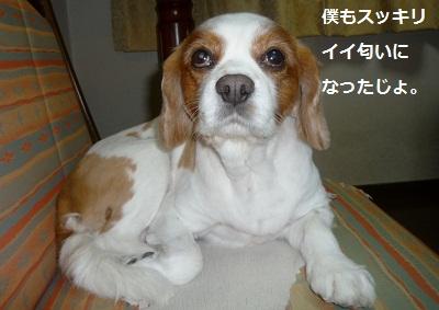 2011_1229_202648-P1120950.jpg
