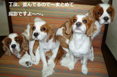 2011_1229_202705-P1120952.jpg