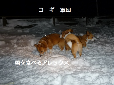 2011_1230_195044-P1120995.jpg
