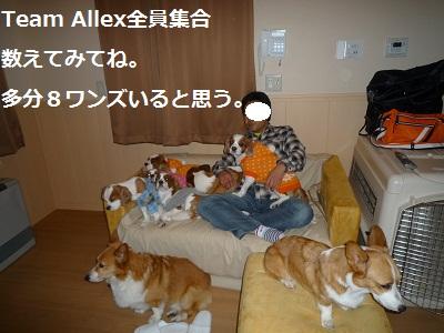 2011_1230_200805-P1130008.jpg