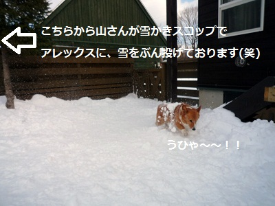 2011_1231_112210-P1130053.jpg