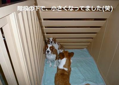 2012_0101_002142-P1130160.jpg