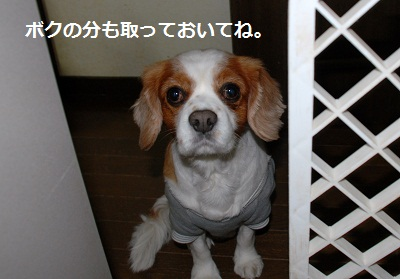 2012_0120_122429-DSC_0956.jpg