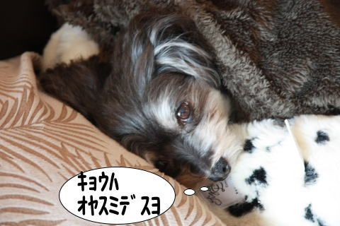 0107-3_20110107214634.jpg