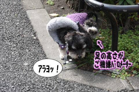 0214-3_20100214140215.jpg