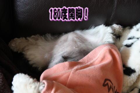 0321-3_20100320203536.jpg