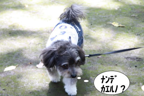 1006-10_20101007002404.jpg