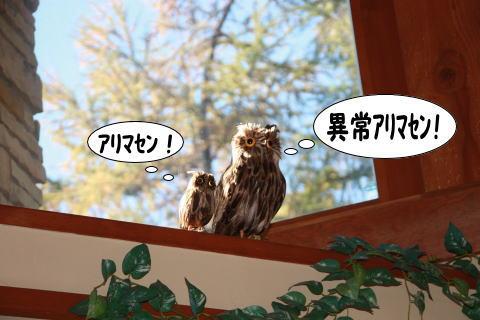 1023-11_20101024010706.jpg