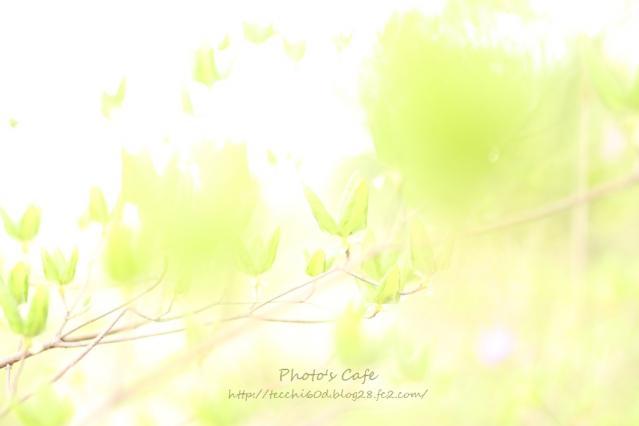 IMG_3362_R.jpg
