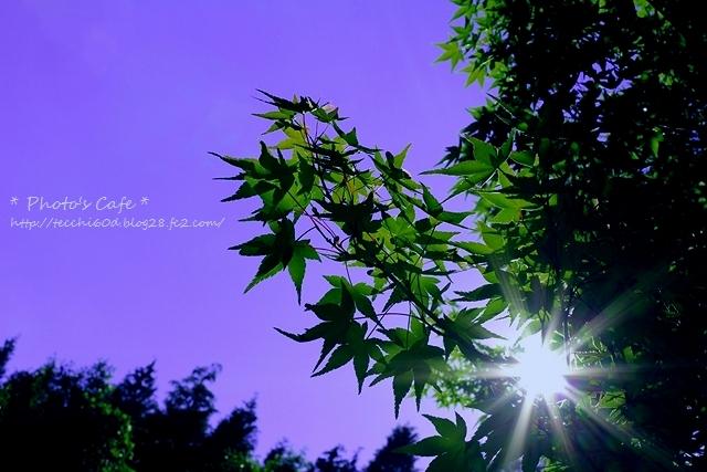 IMG_5229_R.jpg