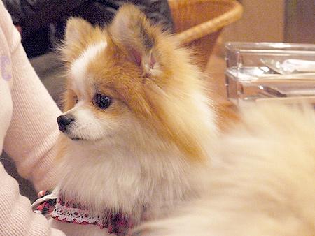 2010/1/16 Puppy'sDining2