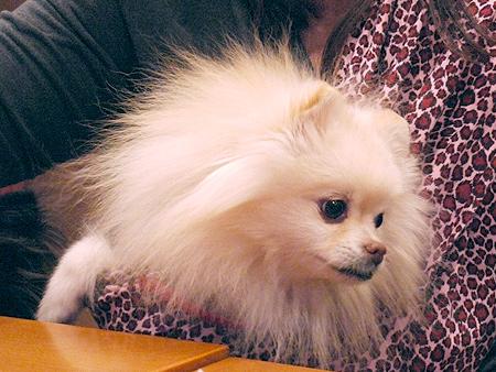 2010/1/16 Puppy'sDining3
