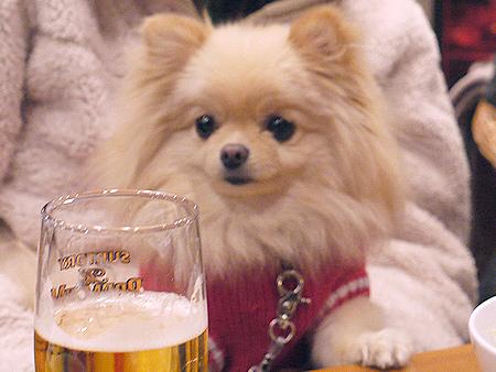 2010/1/16 Puppy'sDining4