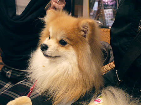 2010/1/16 Puppy'sDining5