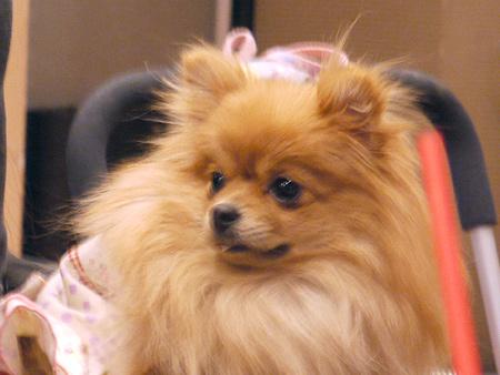 2010/1/16 Puppy'sDining6