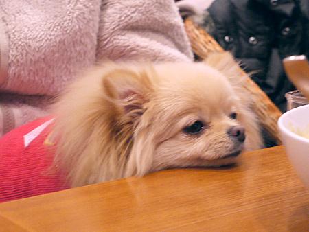 2010/1/16 Puppy'sDining17