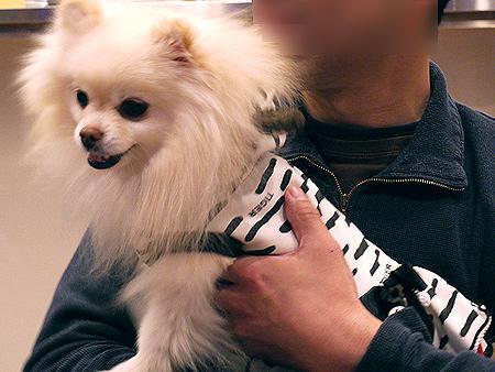 2010/1/16 Puppy'sDining2-1