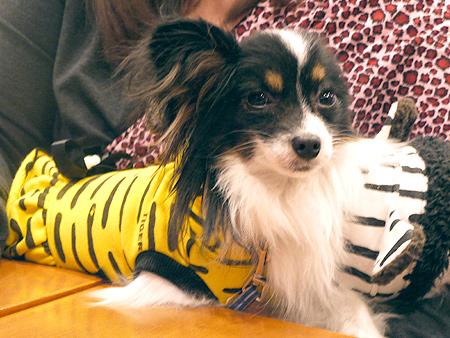 2010/1/16 Puppy'sDining2-4