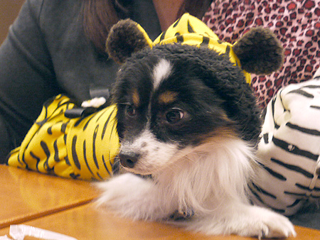 2010/1/16 Puppy'sDining2-5