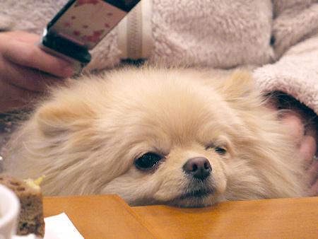 2010/1/16 Puppy'sDining2-6