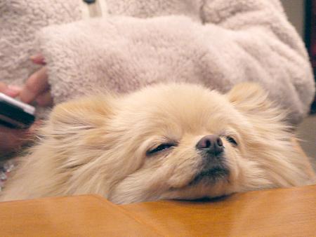 2010/1/16 Puppy'sDining2-7
